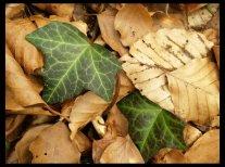 feuilles-vertes-mortes[1]